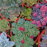 Succulents ペーパーナプキン