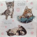 Small kittens ペーパーナプキン
