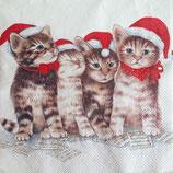 Singing Cats ペーパーナプキン