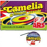 CAMELIAS GRANDES - 6 Unid.