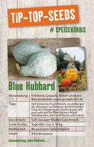 Saatgut Blue Hubbard