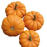 Kürbis - Mandarin orange