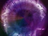 Die Iris