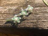 """Blütenhaarnadeln klein auf """"Krokodilspangen"""""""