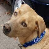 Plastikverschluss-Hundehalsband bestickt mit Namen und Telefonummer