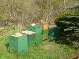 Buckfast Ableger,4 Waben; DNM 1 1/2 oder Dadant US