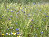 vom Blauen See- mit Kornblumen- honig feincremig (330g)