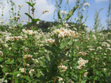 Herbstliebe aromatisch, würzig + sämig  (Honig aus Kindertagen)(330g)