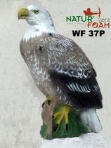 "Natur Foam ""Aigle"" Weißkopf-Seeadler"