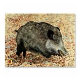 Tierbild Wildschwein BW