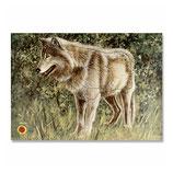 Tierbild Wolf BW