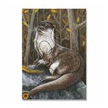 Tierbild Otter BW