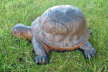 Wildlife Eco - Tartaruga/Turtle