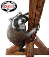 Leitold - kletternder Waschbär