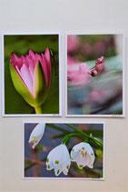 Ensemble de 3 doubles cartes Les fleurs.
