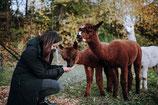 Alpaka-Erlebnis »Zu Hause bei den Jungs«