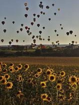 ViP (Prive) Ballonvaart voor 4 Personen