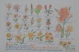 """A3 handgezeichnetes Bild Buntstift  """"Blüten in orange"""" E. Schulz"""