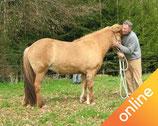 12 Führübungen zum Aufbau einer besonderen Partnerschaft zwischen Pferd und Mensch