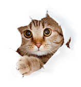 Kastration einer Katze
