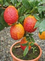 Лимон Red Skin