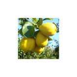 Лимон C. Limon Zagara Bianca