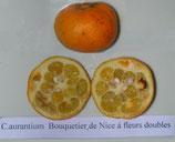 """C. aurantium """"Bouquettier de Nice"""" (Померанец Цветок Ниццы)"""