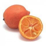 Лимон кантонский красный (Citrus limonelloides )