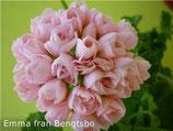 Пеларгония тюльпановидная Emma fr bergsbo