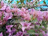 Bougainvillea Glittering Stars Blossom