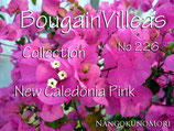New Caledonia Pink カレドニア・ピンク