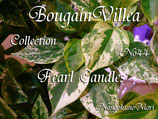 Bougainvillea Pearl Candles
