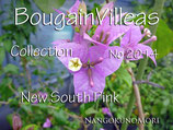 New  Bougainvillea south Pink  サウスピンク