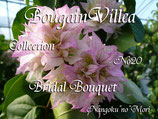 Bougainvillea Bridal Bouquet  ブライダルブーケ