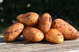 Kartoffeln (neue Ernte)