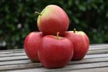Äpfel Elstar (1kg)