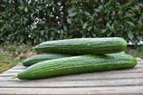 Salatgurke (1 Stk.)
