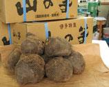 伊予の山の芋 10kg