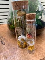 Glazen buis met droogbloemen groot