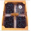 【自然栽培】鏡野産ブルーベリー<1200g>