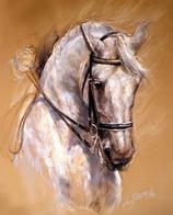 Paard schimmel met hoofdstel