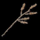 Planta Cerael