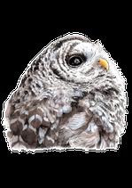 アメリカフクロウ