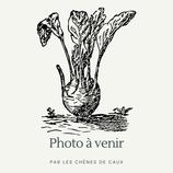 Plantago major 'Purple Perversion' - Grand plantain à feuilles pourpres crispées AB