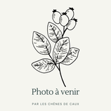 Berberis vulgaris - Epine-vinette AB