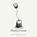Veronica officinalis - Véronique officinale AB