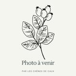 Arbutus unedo 'Compacta' (alba) - Arbousier compact à fleurs blanches AB
