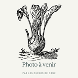 Chenopodium bonus-henricus - Arroche bon-henri AB