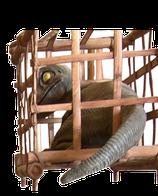 RÉPLICA DE BEBE DINOSAURIO EN JAULA | Réplicas de dinosaurios