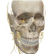 Cranio Facial Release Endonasal Technik - 4 Sitzungen